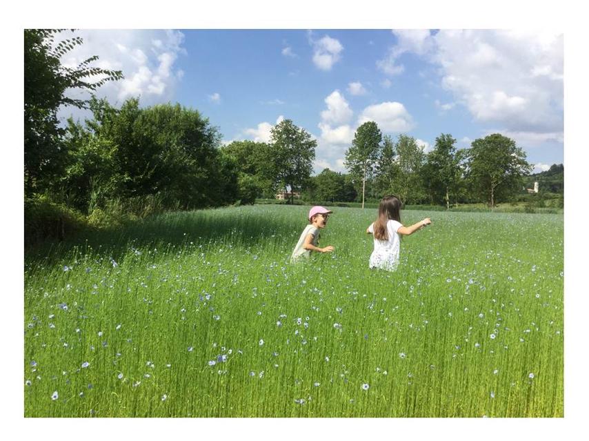 Linificio e Canapificio Nazionale will provide flax and hemp fibers for SSUCHY project